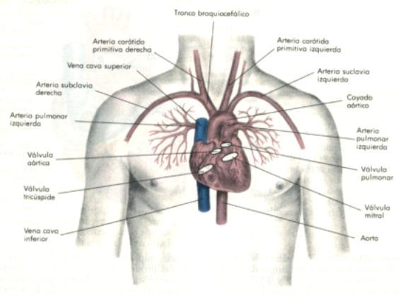 conceptos fundamentales en soporte vital básico e instrumental